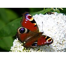 Vibrant Butterfly Photographic Print
