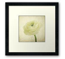 ranunculus blossom Framed Print
