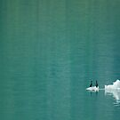 Cormorants on Berg by Tracy Riddell