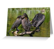 Three Cormorants  Greeting Card
