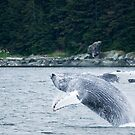 Having a Whale of a Time by Tracy Riddell