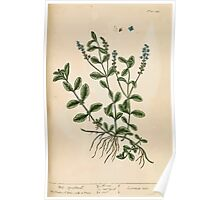 A curious herbal Elisabeth Blackwell John Norse Samuel Harding 1737 0366 Male Speedwell Poster