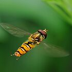 Air Borne Pt 3.0   Hoverfly in flight by Shehan Fernando