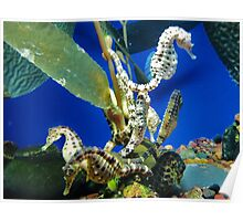Seahorse Roundup Poster