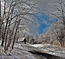 Ice Storm by Lois  Bryan