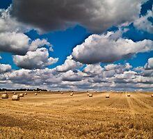 Harvested Hay Field by ArtforARMS