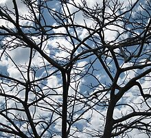 Treedom by John Douglas