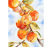 Peaches Without Cream Photographic Print