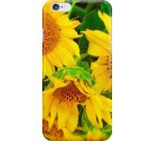 Sunflowers in Vase, Farmers Market, Kansas City iPhone Case/Skin