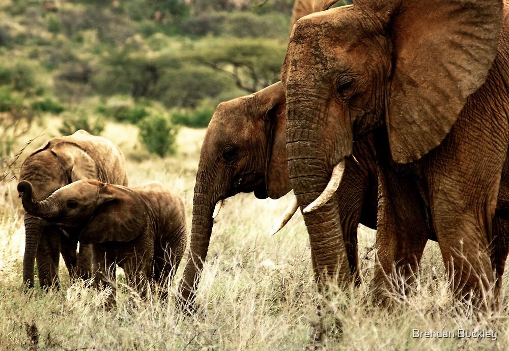 Samburu by Brendan Buckley