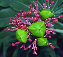 Pod cluster by ♥⊱ B. Randi Bailey