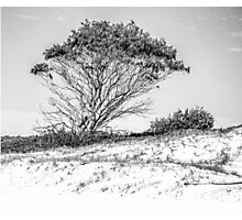 Tree in high key black and white Photographic Print