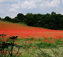 Poppies and a Worcestershire Bump by ambphotos
