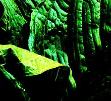 More Skunk Cabbage Please by AlGrover