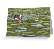 Birds on Bright Water: Juvenile Moorhen2 Greeting Card
