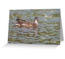 Birds on Bright Water: Juvenile Moorhen3 Greeting Card