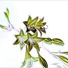 Hosta Bloom Take 2 by Robin Webster