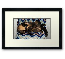 Lucy Snooze Framed Print
