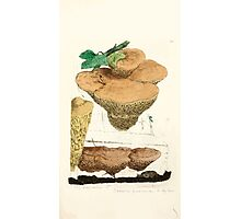Coloured figures of English fungi or mushrooms James Sowerby 1809 0471 Photographic Print