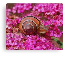 Snail in the pink Canvas Print