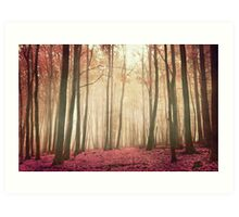 red woods Art Print