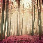 red woods by Iris Lehnhardt
