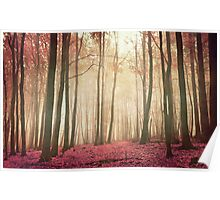 red woods Poster