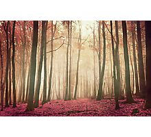 red woods Photographic Print