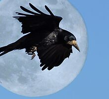 A Crows Moon by Darren Bailey LRPS