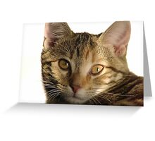 Kitten in Sunlight Greeting Card