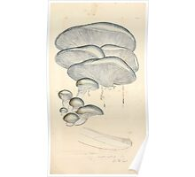 Coloured figures of English fungi or mushrooms James Sowerby 1809 0705 Poster