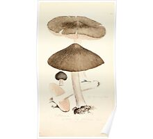 Coloured figures of English fungi or mushrooms James Sowerby 1809 0275 Poster