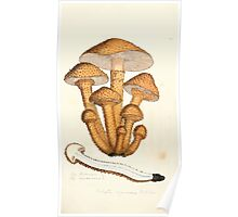 Coloured figures of English fungi or mushrooms James Sowerby 1809 0791 Poster
