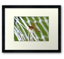 World Cup Dragonfly Framed Print