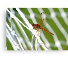 World Cup Dragonfly Canvas Print