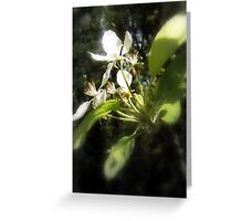 apple blossoms #4 Greeting Card