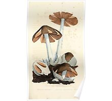Coloured figures of English fungi or mushrooms James Sowerby 1809 0061 Poster