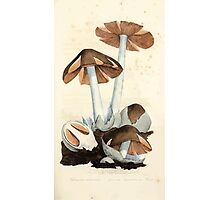 Coloured figures of English fungi or mushrooms James Sowerby 1809 0061 Photographic Print