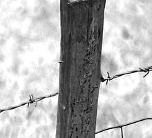 Post Fence by elizabethdaresu