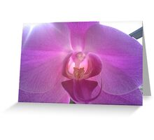 Pearly Orchid Greeting Card
