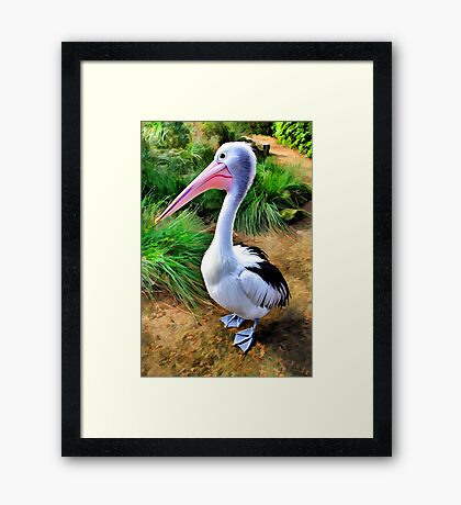 Pelican Perfection Framed Print