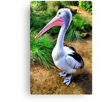 Pelican Perfection Canvas Print