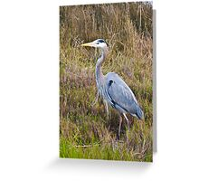 Crane, Crissy Field Greeting Card