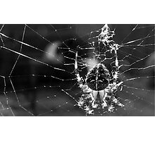 Intsey Winsey Spider .... YUK! Photographic Print