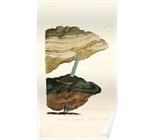 Coloured figures of English fungi or mushrooms James Sowerby 1809 0497 Poster