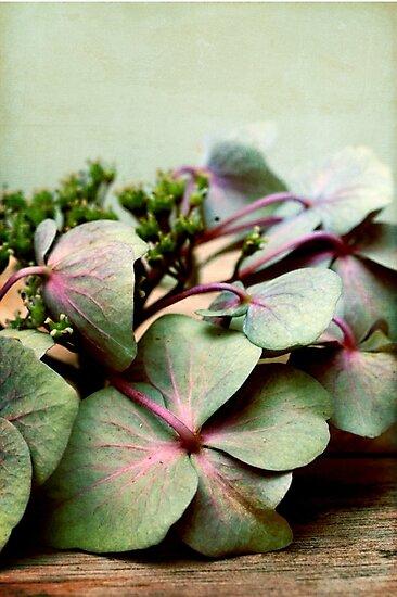 nostalgic blossoms by Iris Lehnhardt