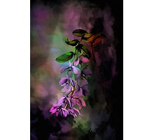 Anosmum... Photographic Print