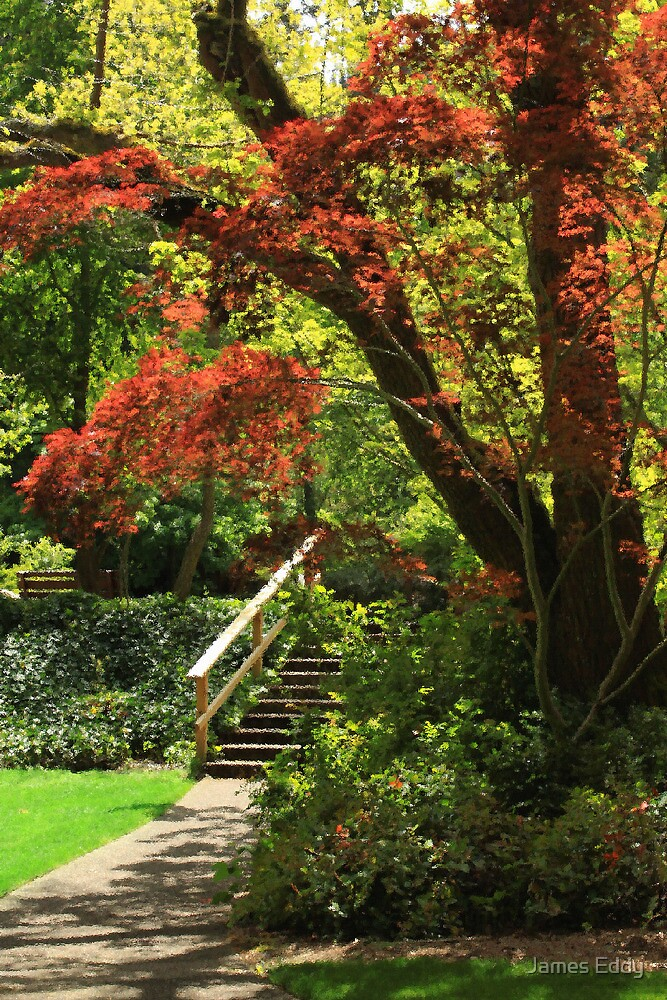 A Walk In Lithia Park by James Eddy