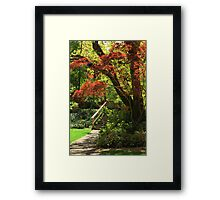 A Walk In Lithia Park Framed Print
