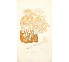Coloured figures of English fungi or mushrooms James Sowerby 1809 0447 Photographic Print